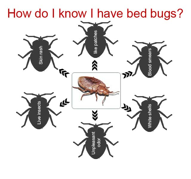 Bed Bugs Symptoms Images