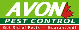 Pest Control Service – Customer's Choice